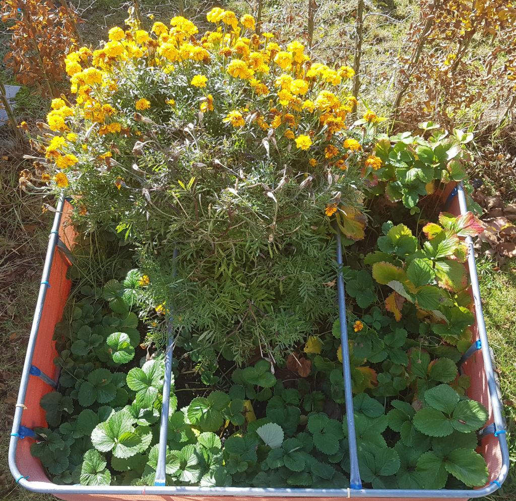 Raised flower bed – 2016-10-30